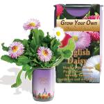 English Daisy Growing kit