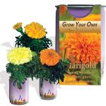Marigold Growing kit