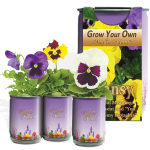 Pansy Growing Kit