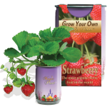 Strawberry Growing kit