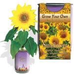 Sunflower Growing Kit