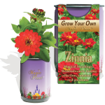 Zinnia Elegans Growing Kit