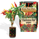 Charleston Hot Pepper Growing kit