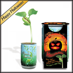 """Happy Halloween"" Magic Plant"