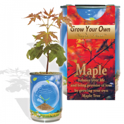 Maple Tree Growing Kit