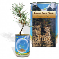 Pine Tree Growing Kit