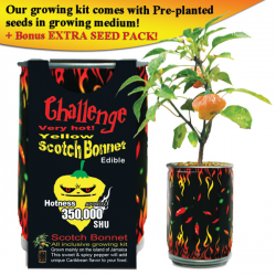 Yellow Scotch Bonnet