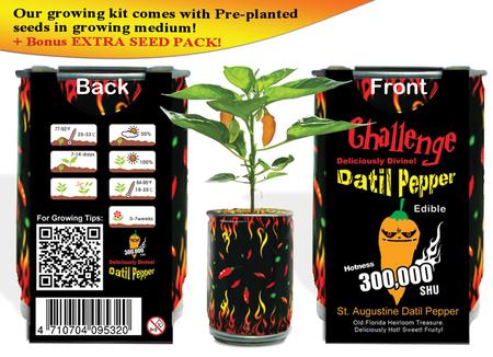 Datil Peppers chili pepper
