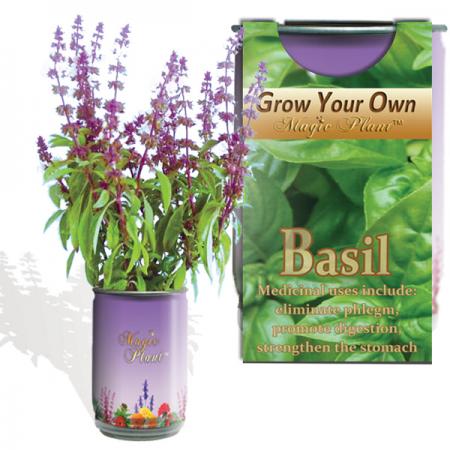 Basil Growing kit