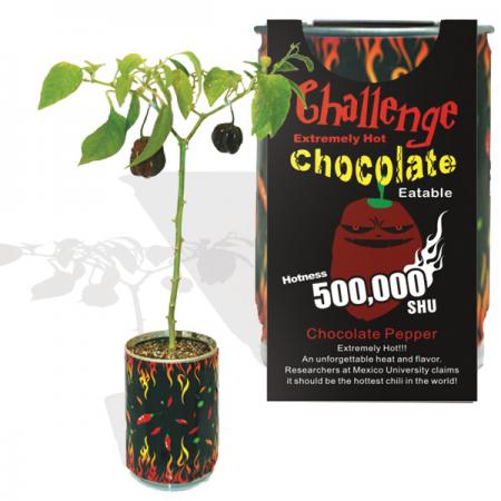 Chocolate Pepper Growing kit