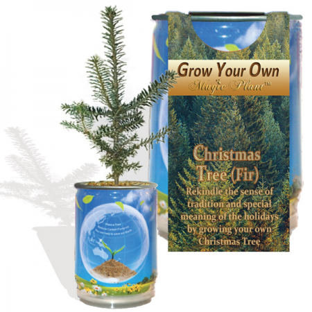Christmas Tree (fir) Growing Kit