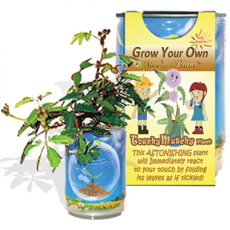 Mimosa Tree Growing Kit