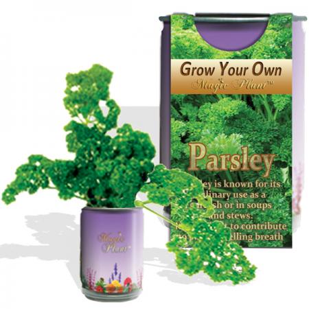Parsley Growing kit