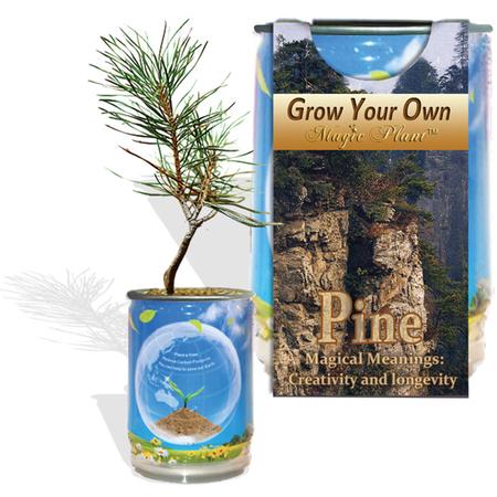 Pine Tree Growing Kit