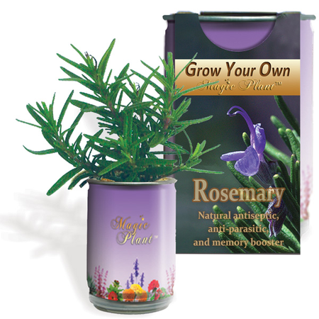 Rosemary Growing kit