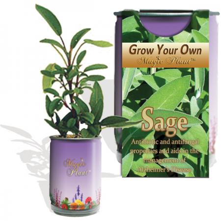 Sage Growing kit