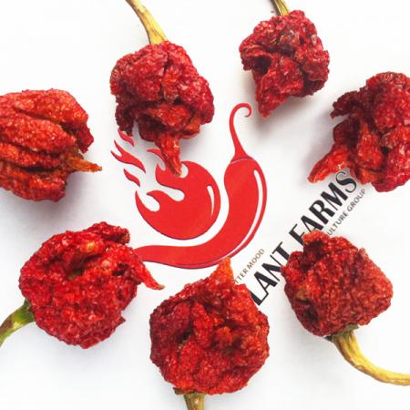 Scorpion Pepper Whole Pods 1kg