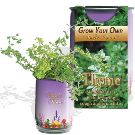 Thyme Growing kit