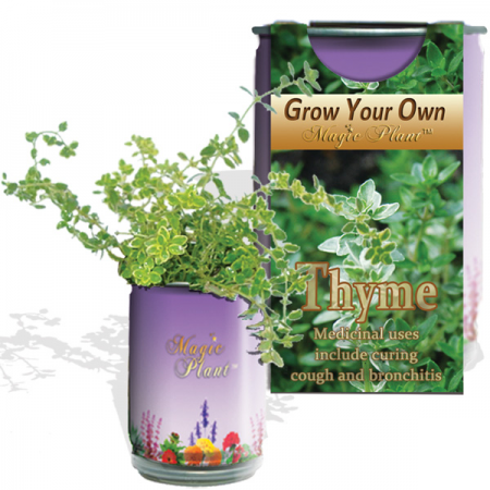 Thyme Growing kit