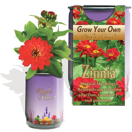 Zinnia Elegans Growing Kit