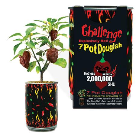 7 Pot Douglah | 7 Pod Douglah | Chocolate 7 Pod