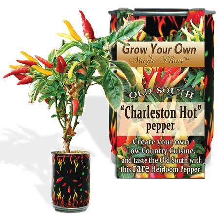 Charleston Hot Pepper Growing kit