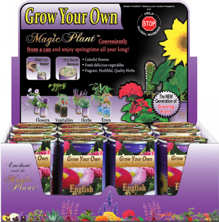 English Daisy Growing kit