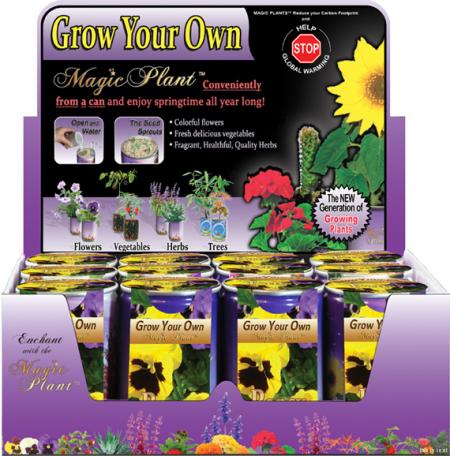 Pansy Growing kit
