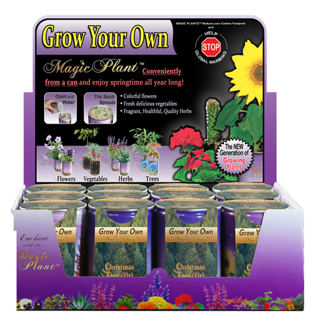 Christmas Tree (Fir) Growing Kit
