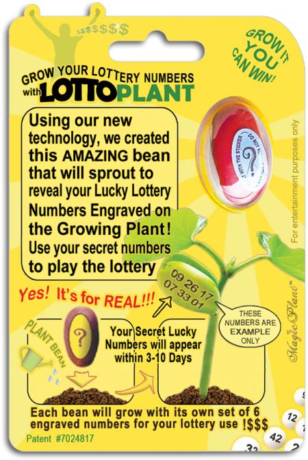 Lotto Plant